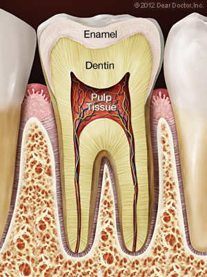 Root Canal Preparation - Healthy Tooth